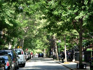 StreetTrees