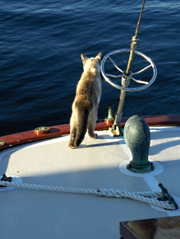 CaptCatPonder-the-water