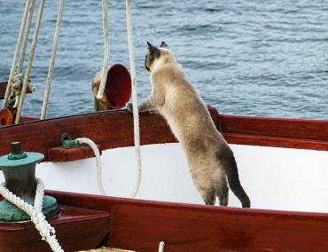 Captain cat small