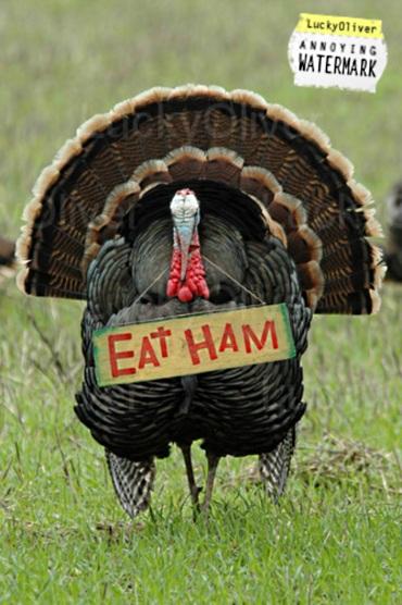 Lo-thanksgiving_humor_eat_ham_turkey-810472