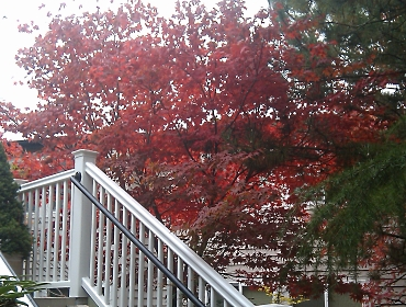 Red Tree