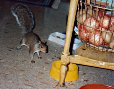 Pet the Squirrel