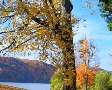 Autumn Leavves