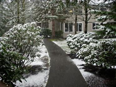 Snow 2011_02_24