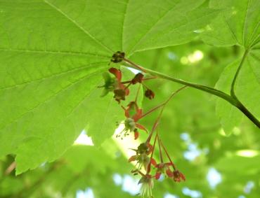 Dangling blossoms