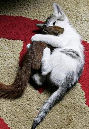Ca tSquirrel