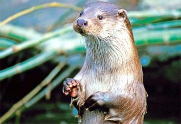 OtterEngland