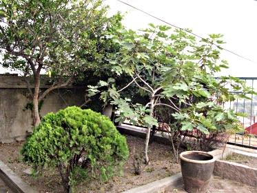 South of Garden