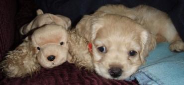 Animals and stuffed animals