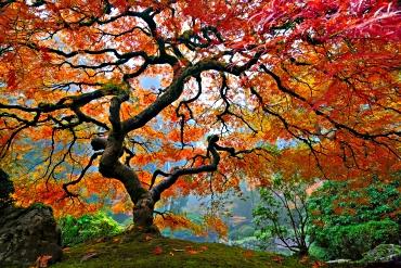 That's of tree