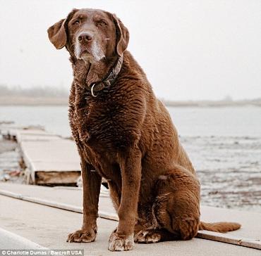 Moxie - Rescue Dog