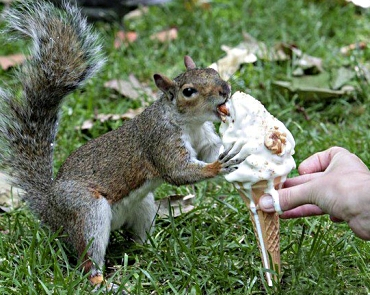 Squirrel and ice cream
