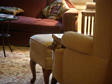 Ollie Peaking from Chair
