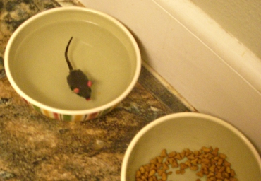 Mouse in Water Bowl