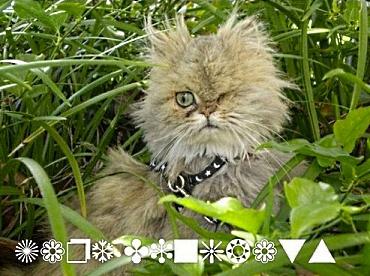 Cat Font Webdings