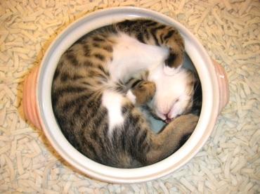 Cat stew
