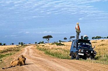 Lion watching watcher
