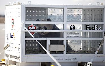 Panda Express 2