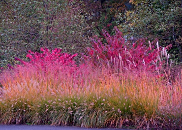 Grasses in Color