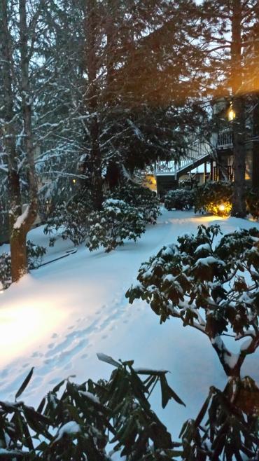 Snow February Dawn