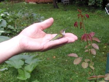 Hummingbird in Terry's hand_best photo