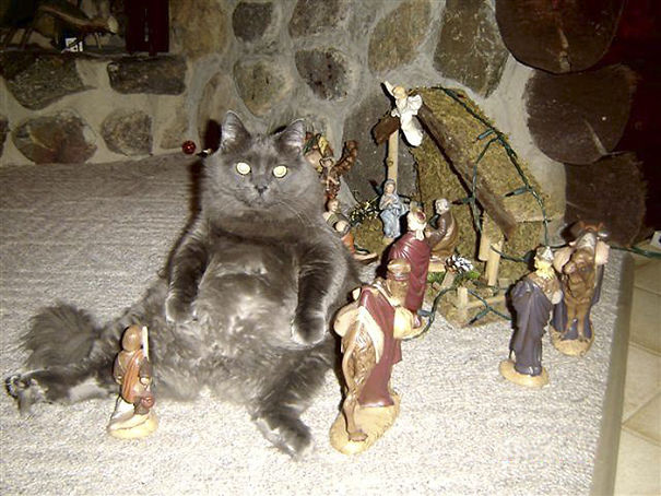 Cats-crashing-nativity-scenes3