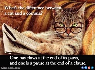 Grammarlycat