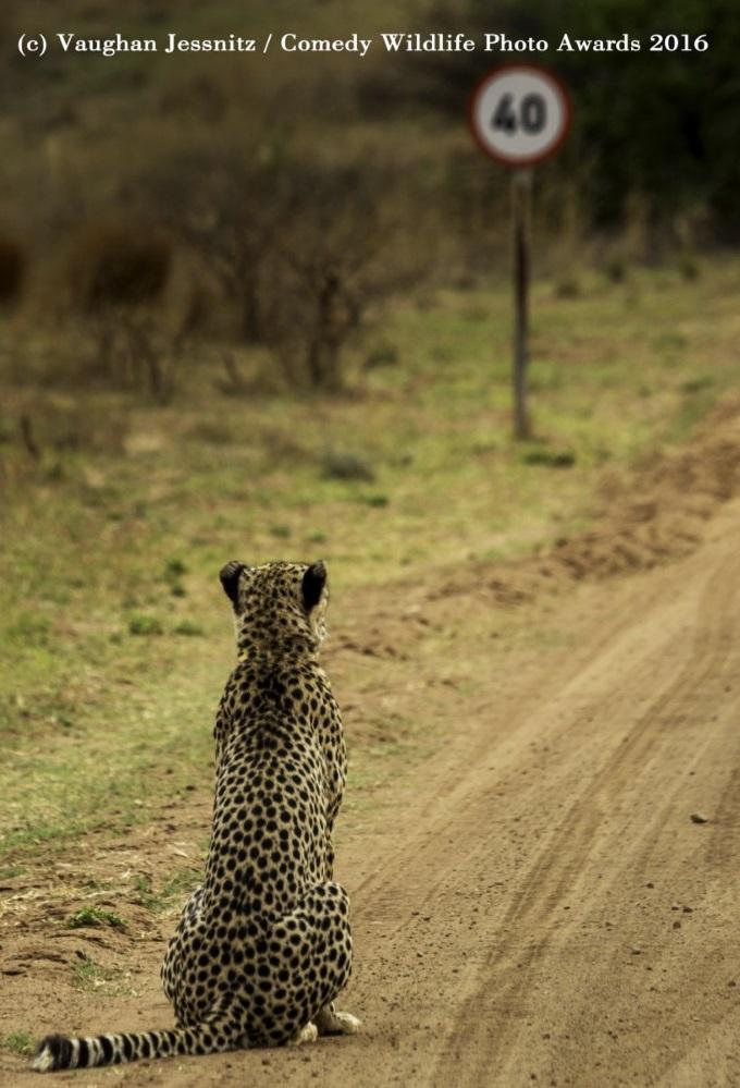 Leopardfinalist