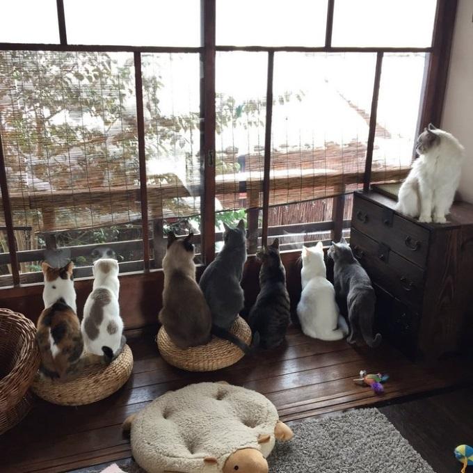 Heavy-snowfall-kyoto-japan-cats
