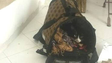 La gattina Lola