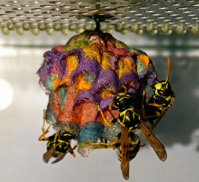 Colorful-paper-wasp-nests-rainbow-mattia-mechetti-4