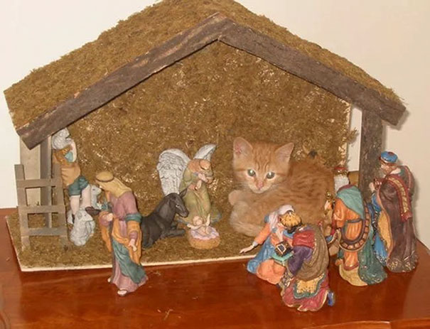 Cats-crashing-nativity-scenes