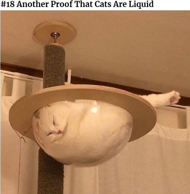 LiquidCat