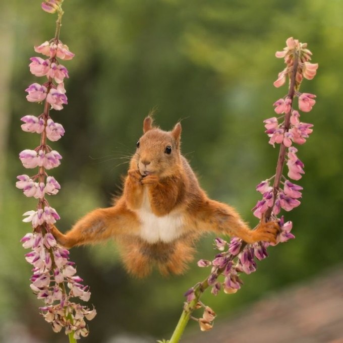 SplitSquirrel
