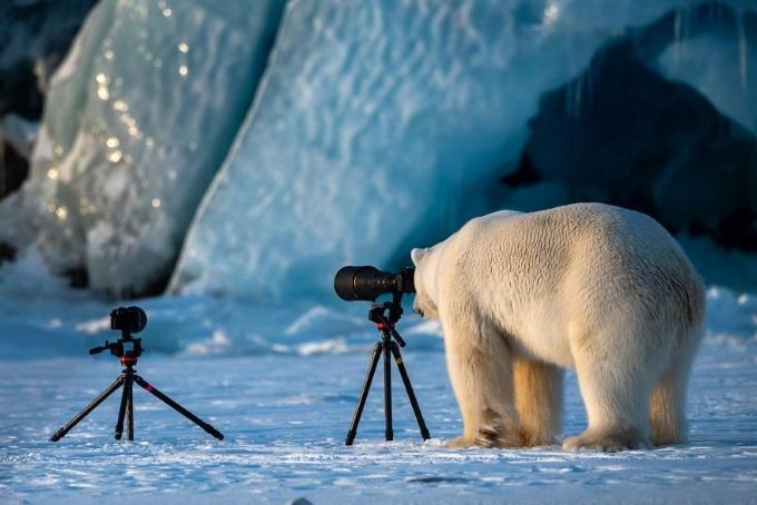 WildlifePhotogrbear
