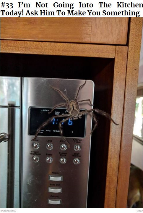 SpiderOnMicrowave