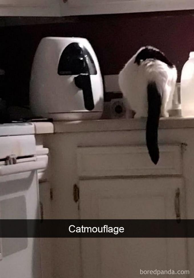 Cat-SnapchatsBoredPanda2