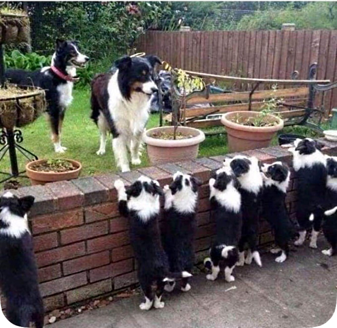 Doggieborderwall