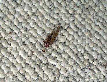 Deadbug