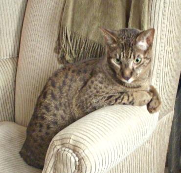 Ollie2008_08